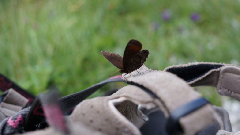 Ein Schmetterling auf meinem Schuh